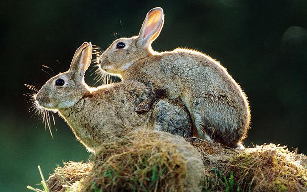 rabbits_3170958b